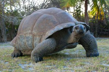 aldabra-photo_01